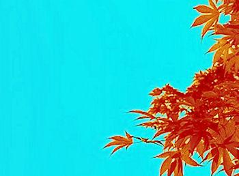a.fall5.jpg