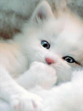 cat1_R.jpg