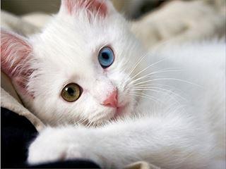 cat4_R.jpg