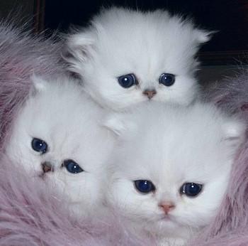 cat8.jpg